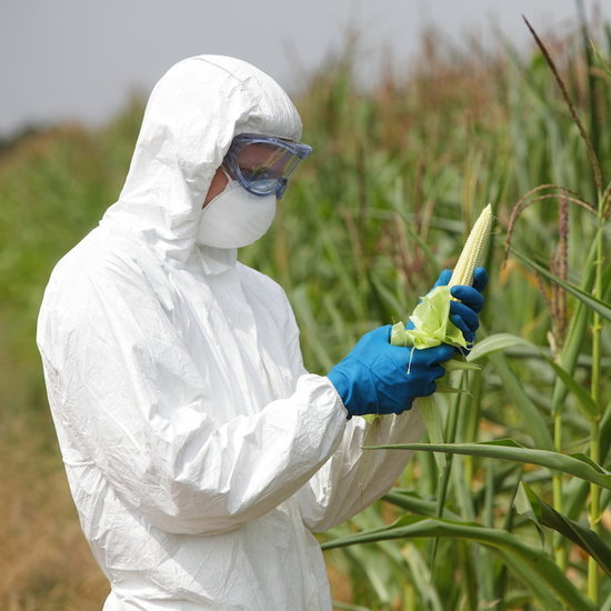 5 Things You Didn't Know About GMO Foods