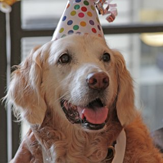 Birthday Party For Sept. 11 Rescue Dog