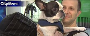 Pilot Diverts Flight to Save Dog From Freezing to Death