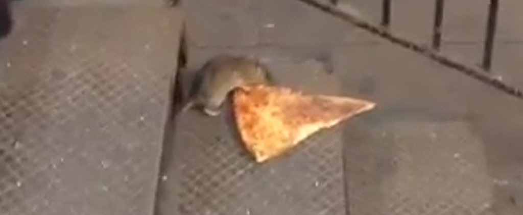 Pizza Rat Is What Life Goals Are Made Of