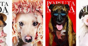 Fashion Magazine Covers Revamped With Rescue Pups Are So Fetch