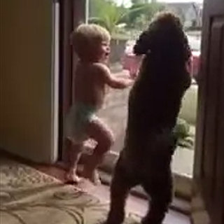Video of Baby and Dog Dancing When Dad Comes Home