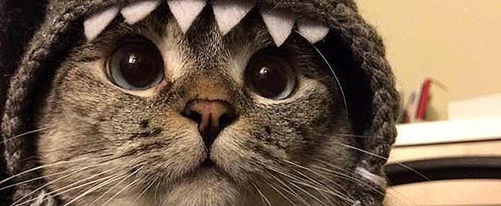 This Cat Has Over 2 Million Instagram Followers, and You're About to Be 1 of Them