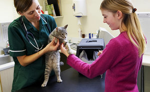 How to Minimize Fear in Cats Before a Visit to the Vet