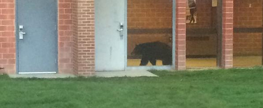 Well, This Happened: A Black Bear Roamed the Halls of a Montana High School