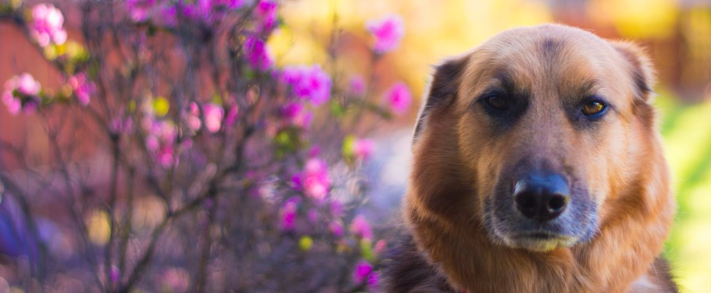 How to Check For Breast Cancer in Your Dogs and Cats