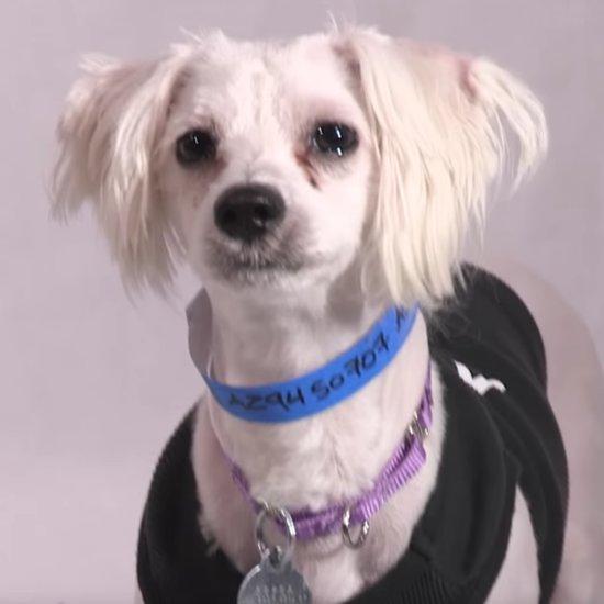 Heavy Petting Pet Adoption Web Series   Aziz Ansari