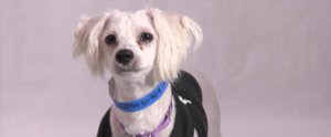 Buddy Loves Jokes, Loves Having a Good Time, and Wants You to Adopt Him ASAP