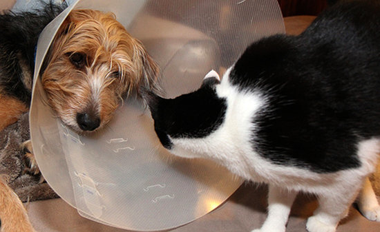 My Cat Was an Angel While My Dog Wore the Cone of Shame