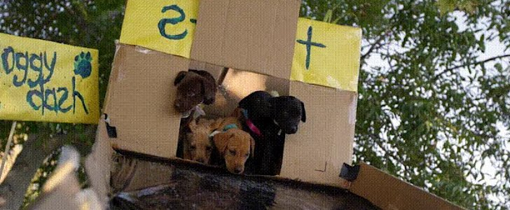 These Pups Trying to Navigate an Obstacle Course Will Make Your Day