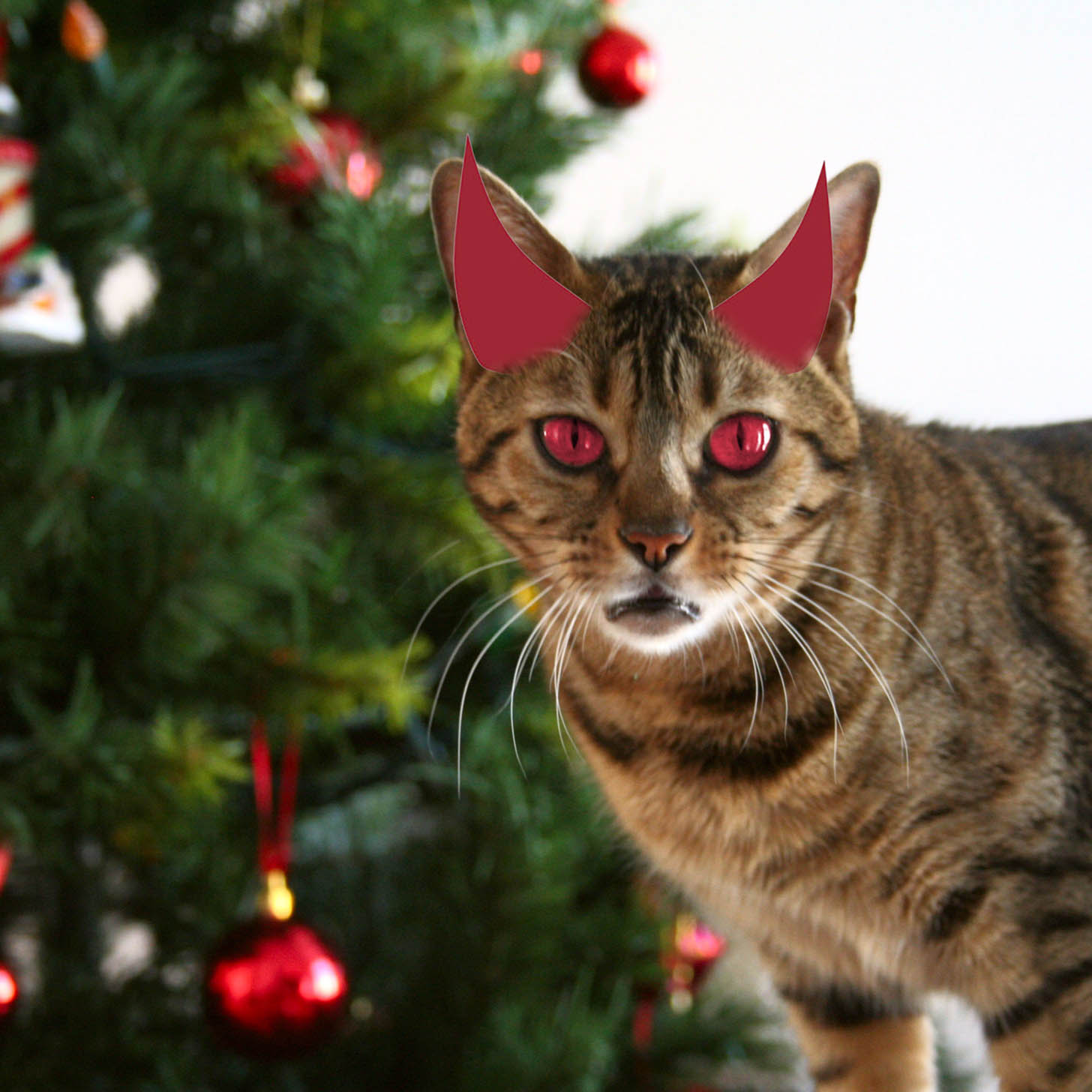 Are Christmas Trees Bad For Cats: Cats Attack Christmas Trees