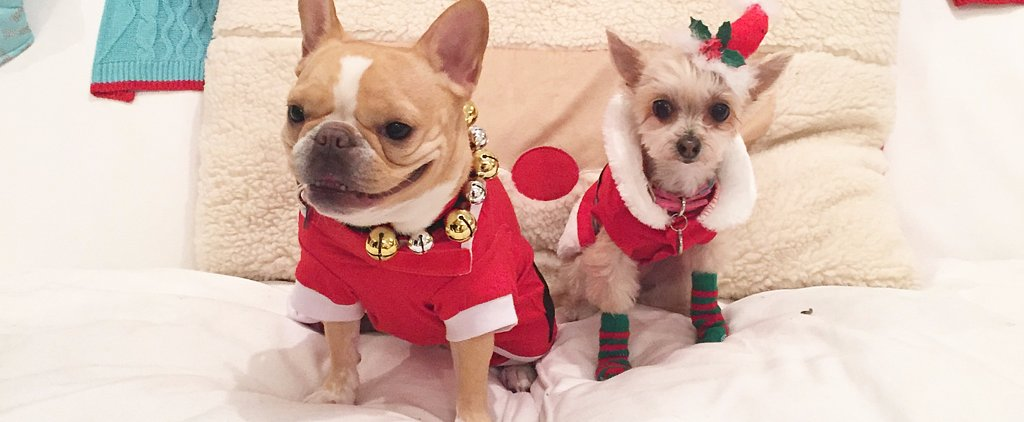 19 Gift Ideas For Only the Most Fashionable Pups You Know