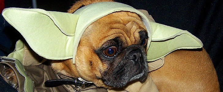 Most Popular Star Wars-Inspired Pet Names