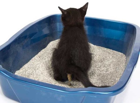 Litter Box Tips for Every Stage of a Cat's Life
