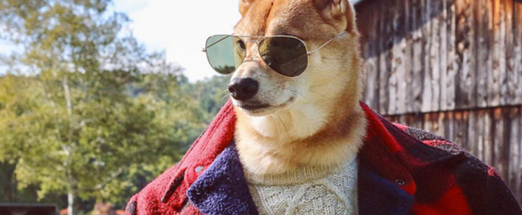 16 Pets Who Dress Better Than You