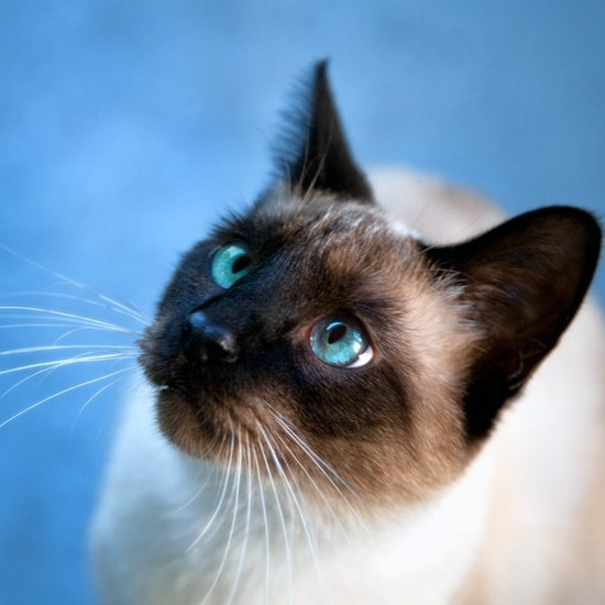 What Age Do Cats' Eye Color Change?