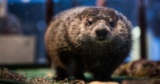 Reasons The Groundhog Didn't Run Scared Back Into His Hole