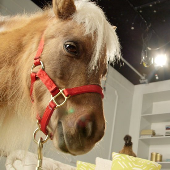 Minihorse Surprise | Video
