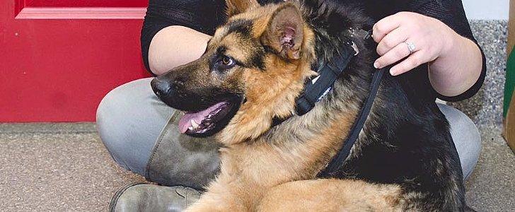 Meet Quasi, the Beautiful Canine Hunchback