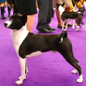 Dog Show Terms