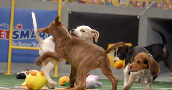 Puppy Bowl 2016: Puppies Play Their Hearts Out In Doggone Adorable Match