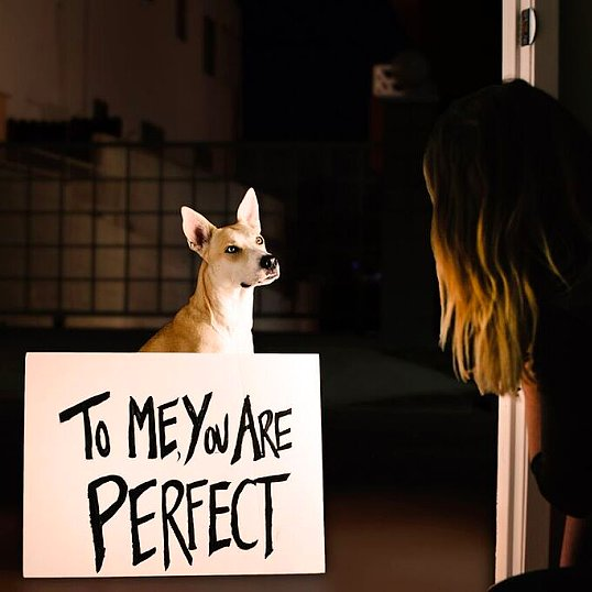 Romantic Movies Reenacted by Dogs