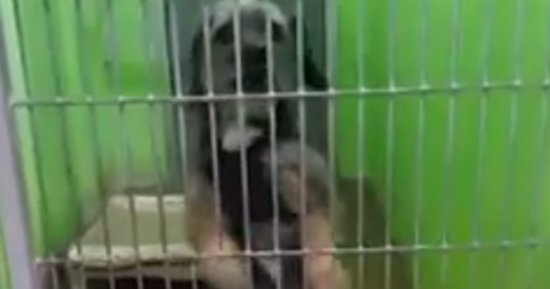 This Dancing Dog Is So Excited, And She Just Can't Hide It