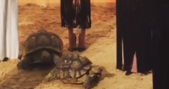 Impromptu Tortoise Sex Is The Real Star Of New York Fashion Week