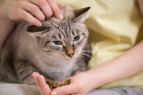 A Cat's Boycott at Mealtime Might Signal Dental Problems