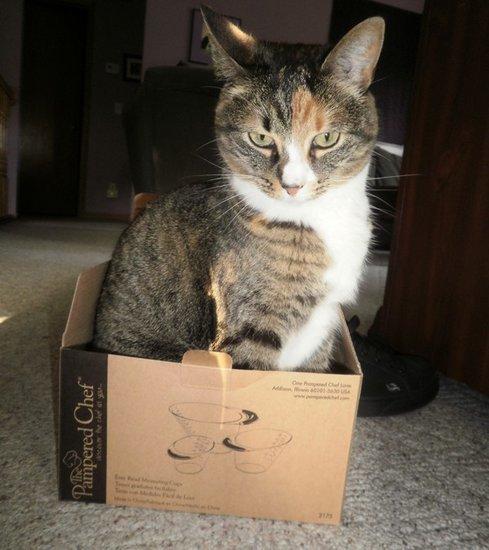 Friday Fanglish Cat Slang: The Annoying Humans