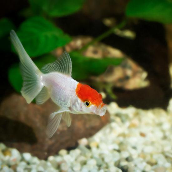 Should I Get a Fish?