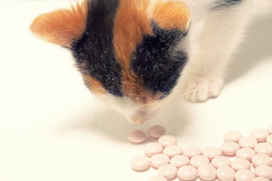 5 Non-Food Household Items That Are Toxic to Your Cat