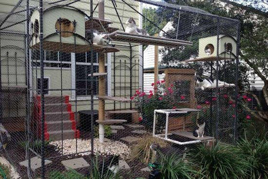 Purrfect Catio: A Business That Makes Cats Happy While Keeping Them Safer Outdoors