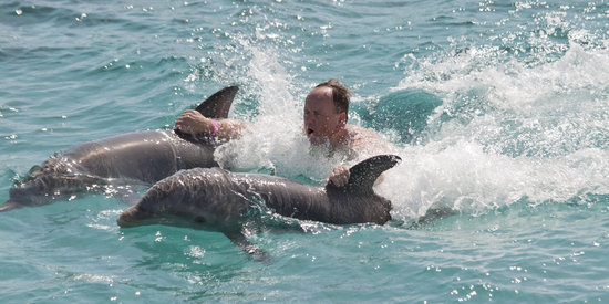 Dolphins Are Getting Shipped To The Desert Just So We Can Swim With Them