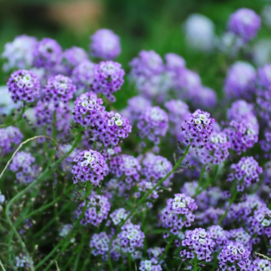 21 of the Best Plants For Pollination