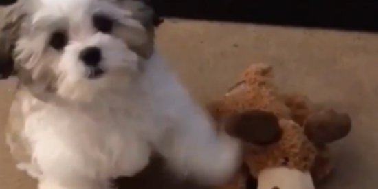 Dog Picks Pizza Over Best Friend, And We Can't Totally Blame Him