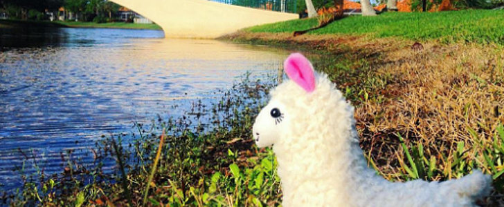 These Photos of a Llama Traveling the World Will Bring Your Mind Some Peace