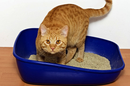 We Solve the Top 10 Problems of Cat Parents: Part One