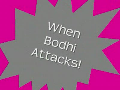When Bodhi Attacks!