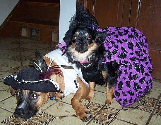 Harlow & Biscuit's Halloween Costumes