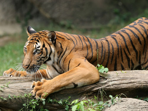 The Crouching Tiger