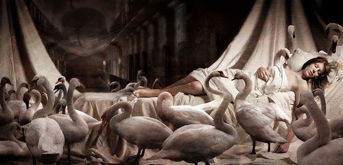 Sleeping Swan Princess