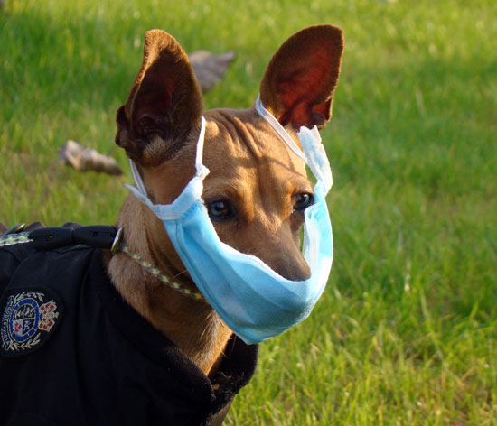 H1N1 Face Mask For Pets: Really Smart or Really Ridiculous?