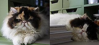 Sugar Shout Out: Martha Stewart's New Persian Kittens