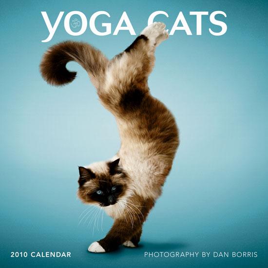 Sneak Peek: Yoga Cats