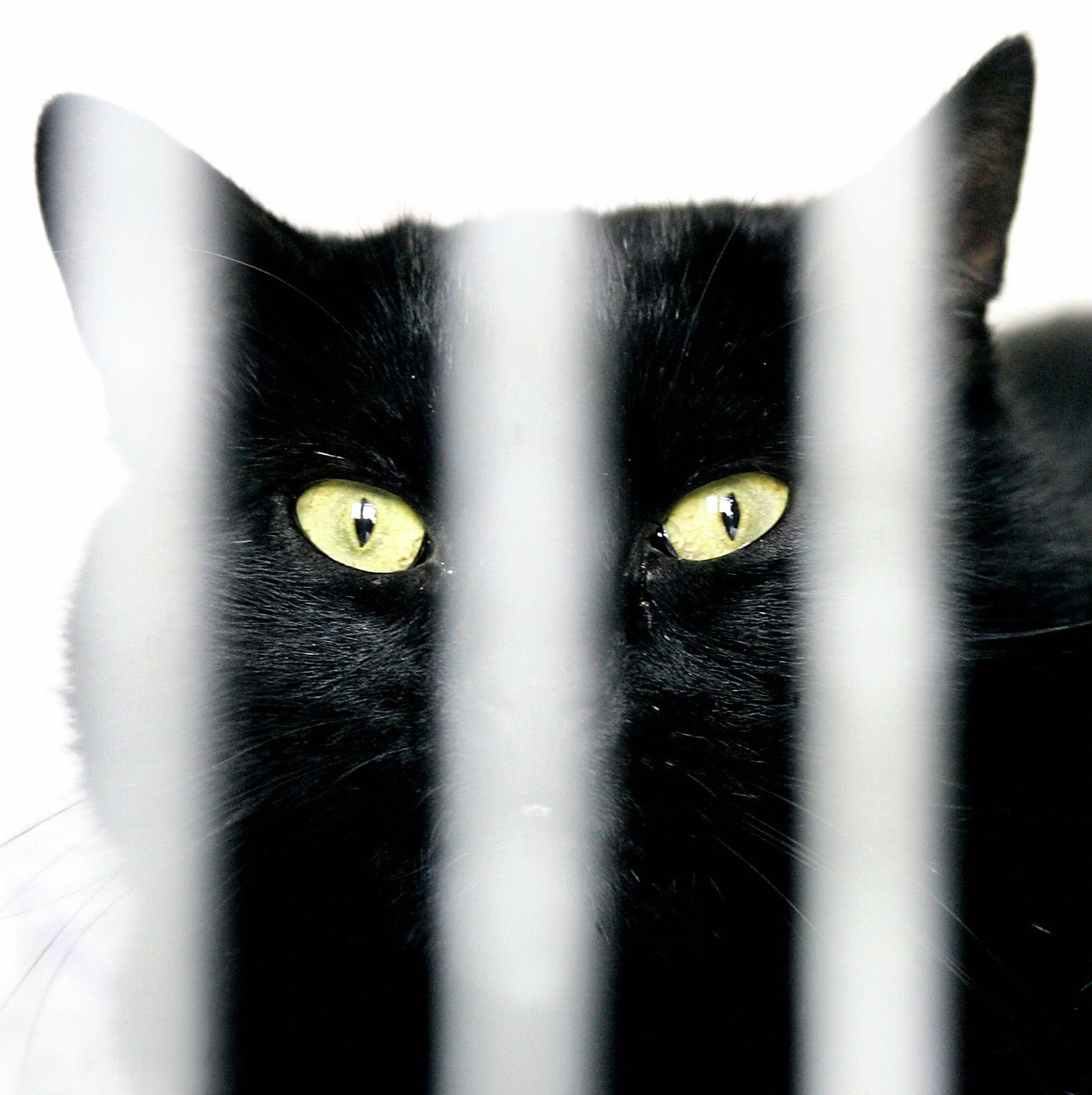 Black Cat, Don't Jump Back!