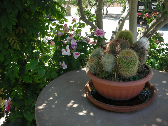 Do You Have Any Cacti at Home?
