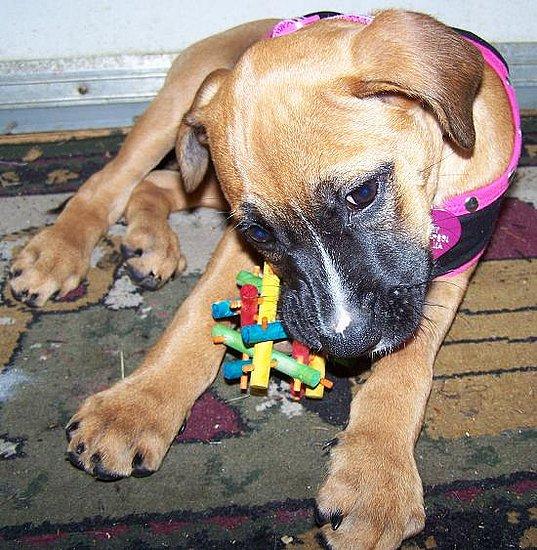 Harlow's Puppy Pix