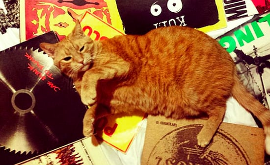 Check Out These Cats Getting Cozy With Vinyl Records