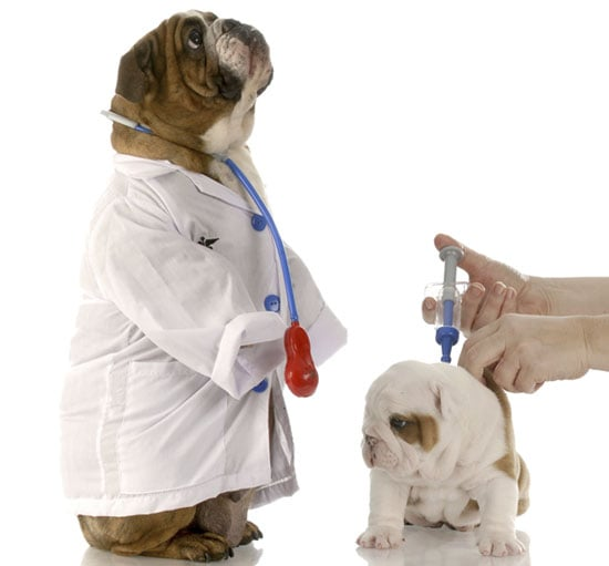 3 Tips to Limit Your Doggie's Doctor Office and Vet Visit Anxiety